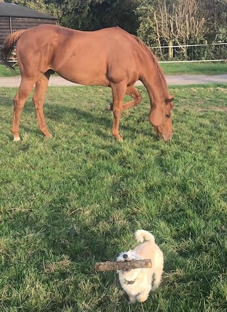 Ex Racer Toby & Daisy